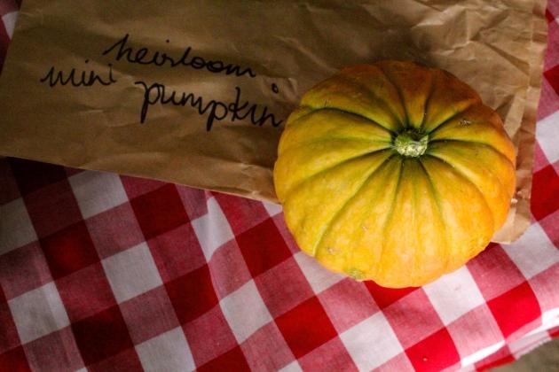 mini heirloom pumpkin